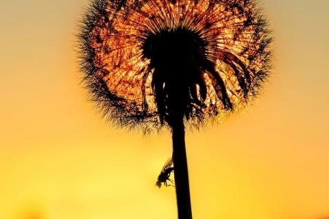 Aurinkoinen-karpanen
